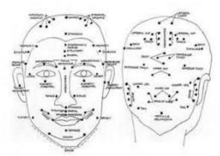 face & head.jpg